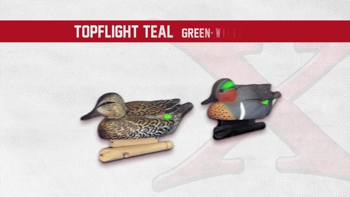 Avian-X Top Flight Teal Early Season Duck Decoys 6 Pack - image 9 from the video