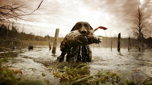 Sportsman's Guide Commercial - #ShareTheThrill  - image 7 from the video