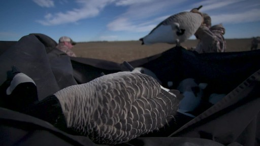 Avian-X Painted Honker Canada Goose Decoy Combo 6 pack - image 5 from the video