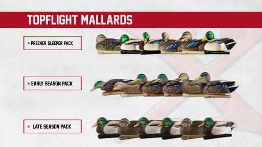 Avian-X TopFlight Late Season Mallards 6 Pack - image 1 from the video