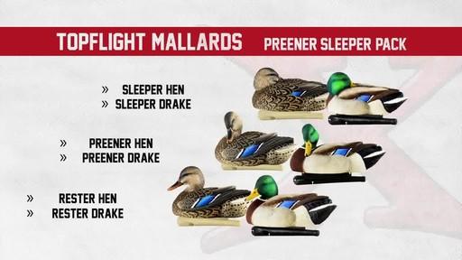 Avian-X TopFlight Late Season Mallards 6 Pack - image 3 from the video