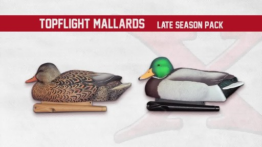 Avian-X TopFlight Late Season Mallards 6 Pack - image 5 from the video