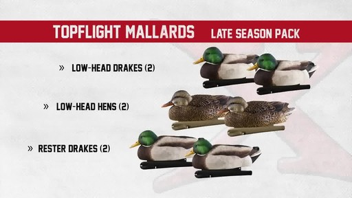 Avian-X TopFlight Late Season Mallards 6 Pack - image 8 from the video