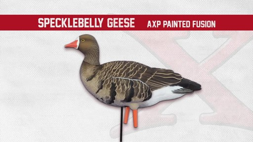 Avian-X AXF Flocked Fusion Full Body Specklebelly Goose Decoys 6 Pack - image 2 from the video
