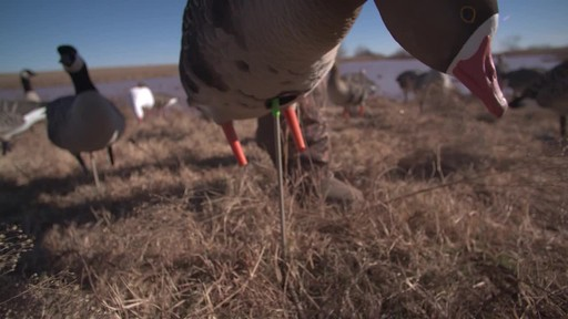 Avian-X AXF Flocked Fusion Full Body Specklebelly Goose Decoys 6 Pack - image 3 from the video