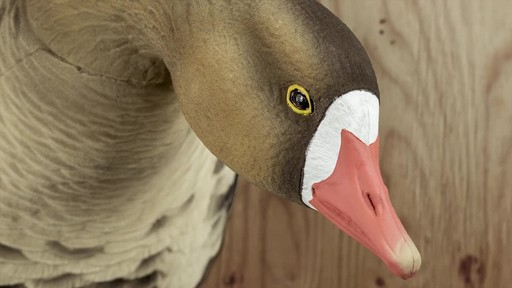 Avian-X AXF Flocked Fusion Full Body Specklebelly Goose Decoys 6 Pack - image 6 from the video