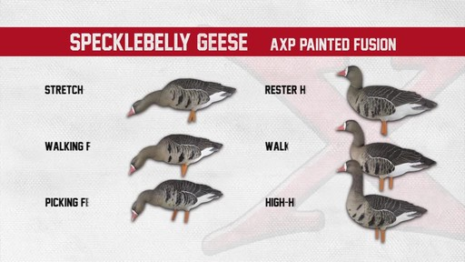 Avian-X AXF Flocked Fusion Full Body Specklebelly Goose Decoys 6 Pack - image 8 from the video