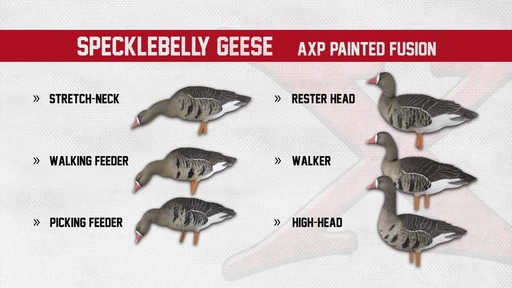 Avian-X AXF Flocked Fusion Full Body Specklebelly Goose Decoys 6 Pack - image 9 from the video