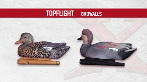 Avian-X Top Flight Gadwall Gray Duck Decoys 6 Pack - image 3 from the video