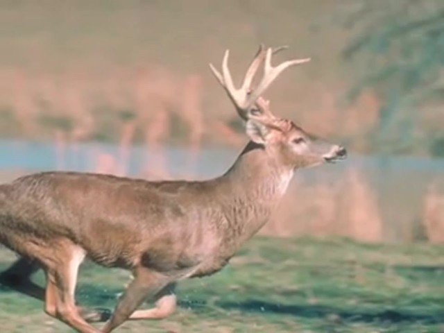 The Grunt - Snort - Wheeze® Deer Call - image 9 from the video