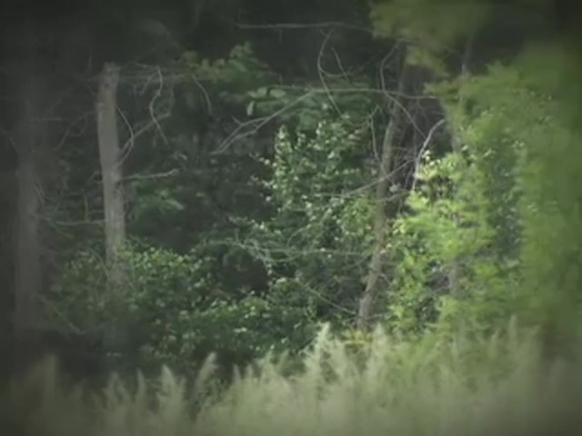 Nikon® 10x42 mm ProStaff® Binoculars Matte Black - image 6 from the video