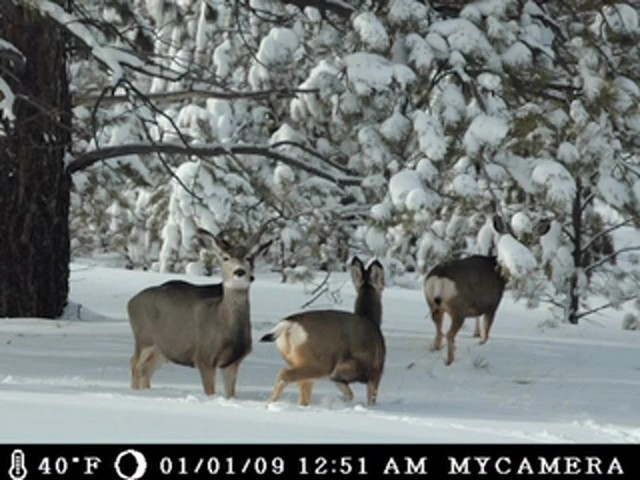 Moultrie® GameSpy I - 45 Digital Camera - image 2 from the video