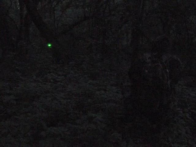 Laser Genetics® AR - 15 Laser Designator - image 10 from the video