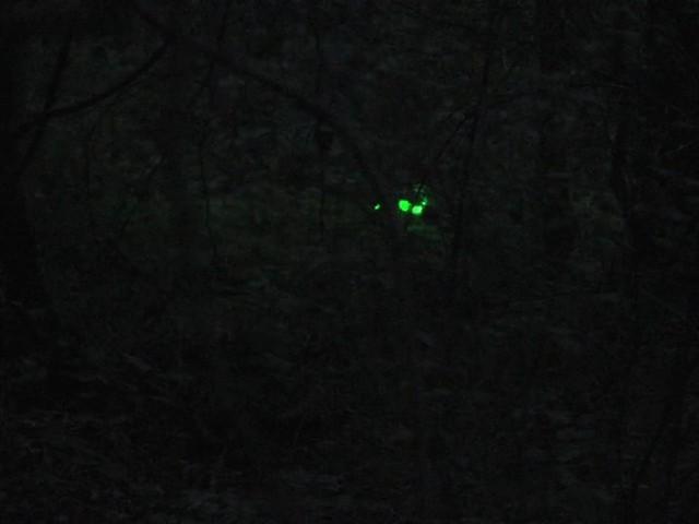 Laser Genetics® AR - 15 Laser Designator - image 4 from the video