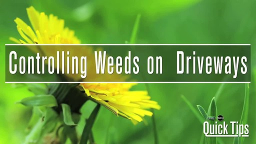 Controlling Weeds on Driveways with Frankie Flowers - image 1 from the video