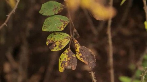 Pruning - How, Why and When to Prune - image 1 from the video