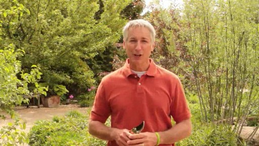 Pruning - How, Why and When to Prune - image 10 from the video