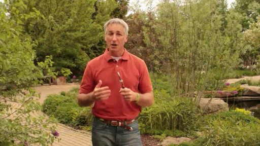 Pruning - How, Why and When to Prune - image 4 from the video
