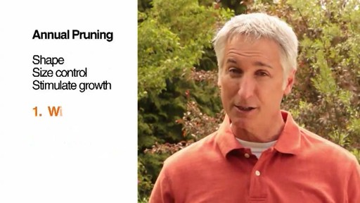Pruning - How, Why and When to Prune - image 8 from the video