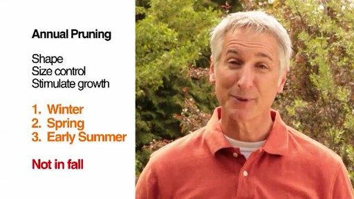 Pruning - How, Why and When to Prune - image 9 from the video
