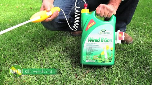 Controlling Lawn Weeds with Frankie Flowers - image 3 from the video