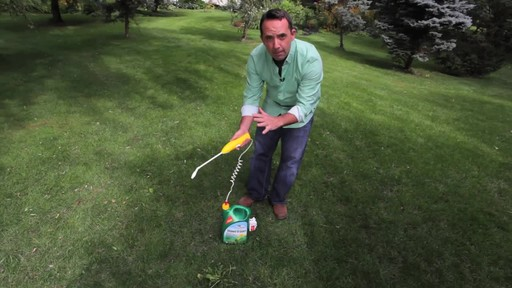 Controlling Lawn Weeds with Frankie Flowers - image 4 from the video