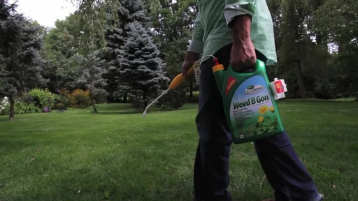 Controlling Lawn Weeds with Frankie Flowers - image 6 from the video
