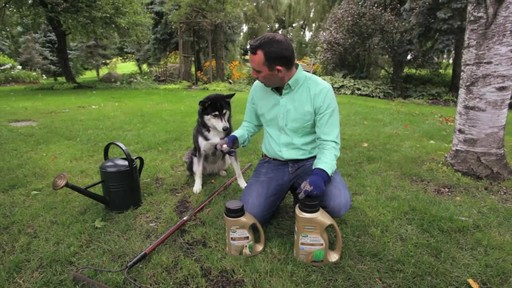 Repairing Lawn Patches with Frankie Flowers - image 1 from the video