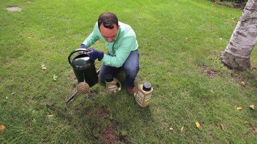 Repairing Lawn Patches with Frankie Flowers - image 5 from the video
