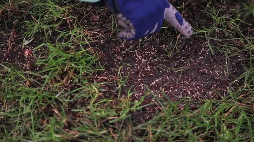 Repairing Lawn Patches with Frankie Flowers - image 6 from the video