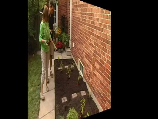 How to Maintain Your Vegetable Garden - image 8 from the video