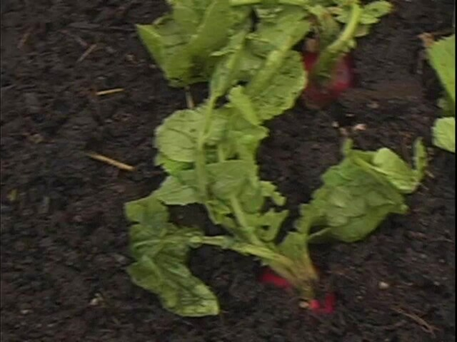 How to Start Your Own Vegetable Garden - image 1 from the video