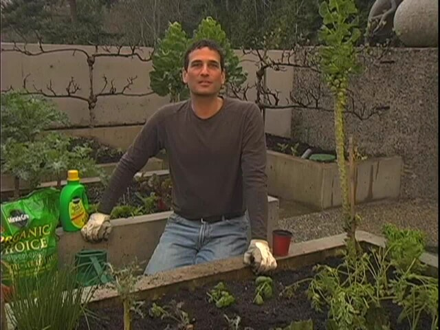 How to Start Your Own Vegetable Garden - image 10 from the video