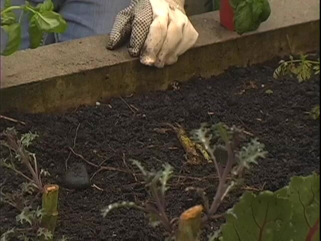 How to Start Your Own Vegetable Garden - image 3 from the video