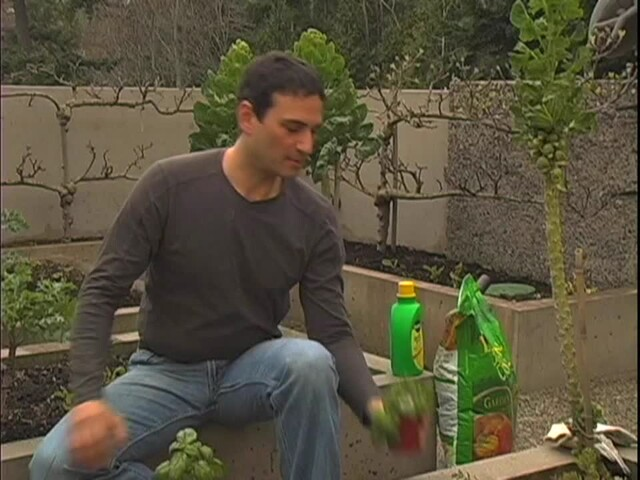 How to Start Your Own Vegetable Garden - image 5 from the video
