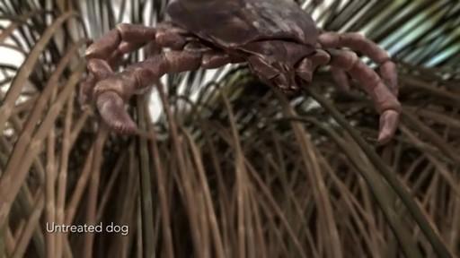 K9 Advantix II Dog Flea & Tick Drops - image 3 from the video