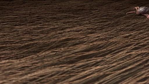 K9 Advantix II Dog Flea & Tick Drops - image 4 from the video