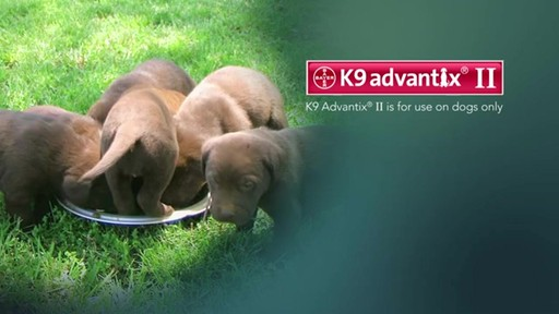 K9 Advantix II Dog Flea & Tick Drops - image 8 from the video