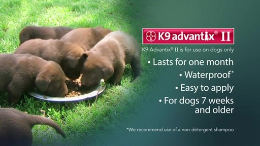 K9 Advantix II Dog Flea & Tick Drops - image 9 from the video