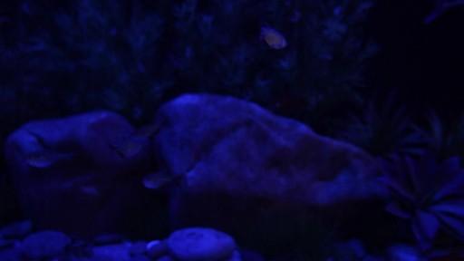 Current USA Satellite Freshwater Aquarium LED Light - image 1 from the video