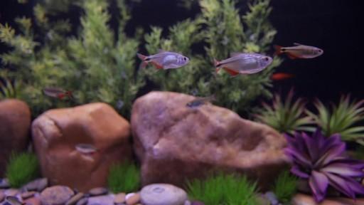 Current USA Satellite Freshwater Aquarium LED Light - image 4 from the video