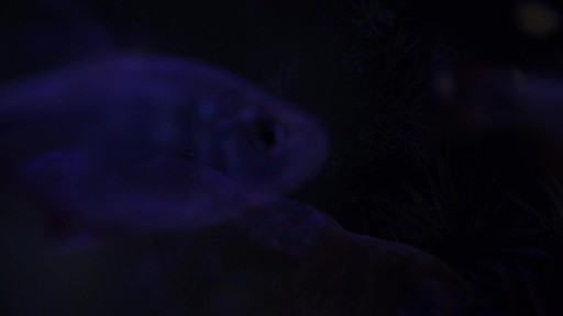 Current USA Satellite Freshwater Aquarium LED Light - image 5 from the video