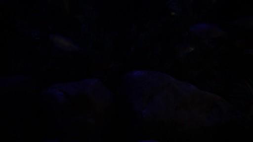 Current USA Satellite Freshwater Aquarium LED Light - image 6 from the video