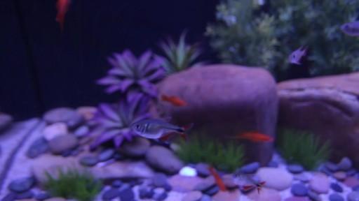 Current USA Satellite Freshwater Aquarium LED Light - image 7 from the video