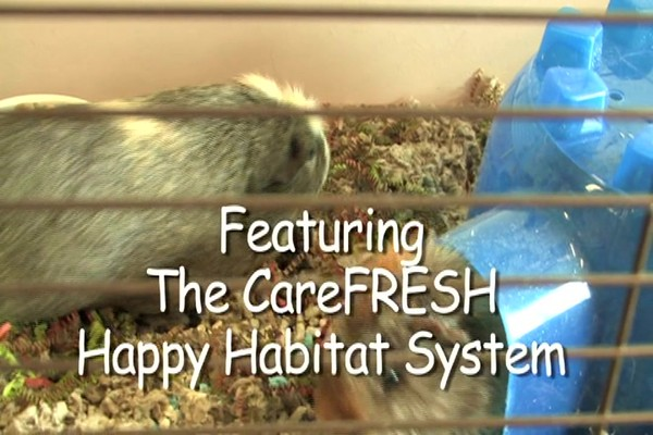 GUINEA PIG - Carefresh Happy Habitat - image 2 from the video