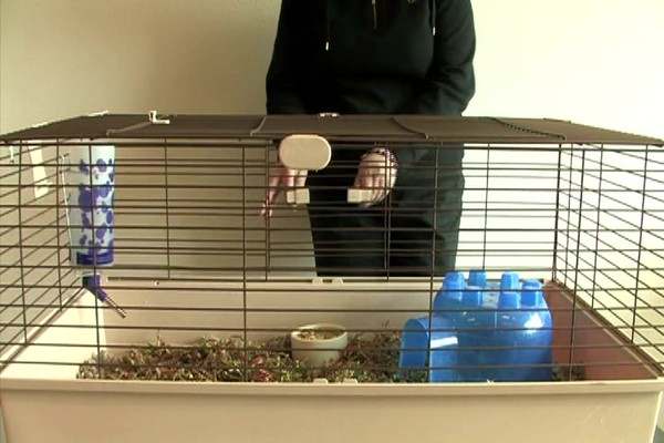 GUINEA PIG - Carefresh Happy Habitat - image 7 from the video