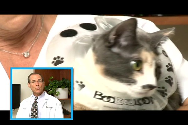 BooBooLoon Pet Recovery Collar - image 8 from the video