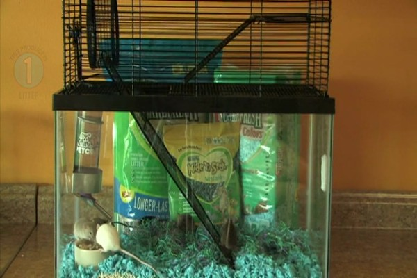 MOUSE - Carefresh happy habitat - image 10 from the video