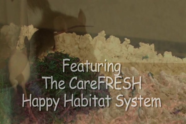 MOUSE - Carefresh happy habitat - image 2 from the video