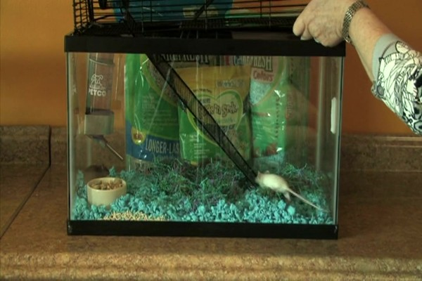MOUSE - Carefresh happy habitat - image 8 from the video